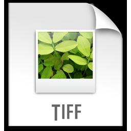 Full Size of z File TIFF