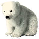 http://icons.iconseeker.com/png/fullsize/happy-holidays-2005/baby-polar-bear.png