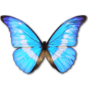Full Size of Morpho Helena Personal