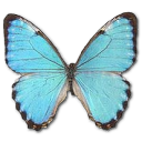 Full Size of Morpho Portis Male
