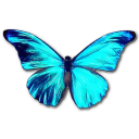 Rhetenor Morpho