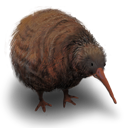 Kiwi Flightless Bird