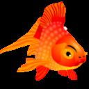 Full Size of Fish