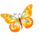 Butterfly orange