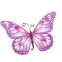 Full Size of Butterfly purple
